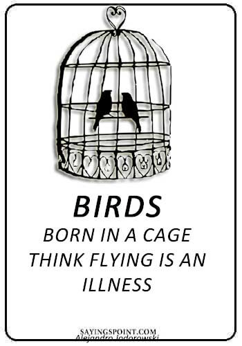 """Birds born in a cage think flying is an illness."" —Alejandro Jodorowski"