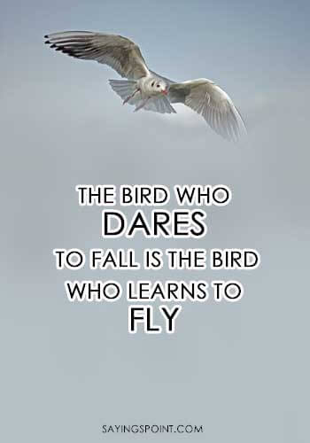"""The bird who dares to fall is the bird who learns to fly."