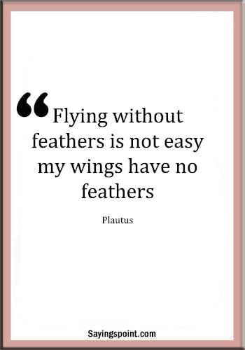 "Feather Sayings - ""Flying without feathers is not easy; my wings have no feathers."" —Plautus"