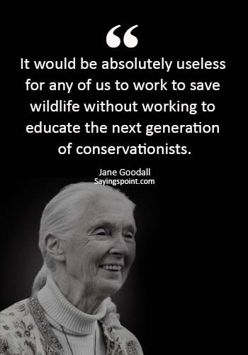 """save wildlife sayings - """"It would be absolutely useless for any of us to work to save wildlife without working to educate the next generation of conservationists."""" —Jane Goodall"""