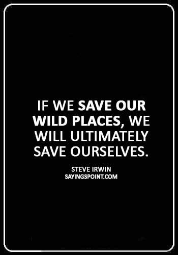 """world wildlife fund quotes - """"If we save our wild places, we will ultimately save ourselves."""" —Steve Irwin"""