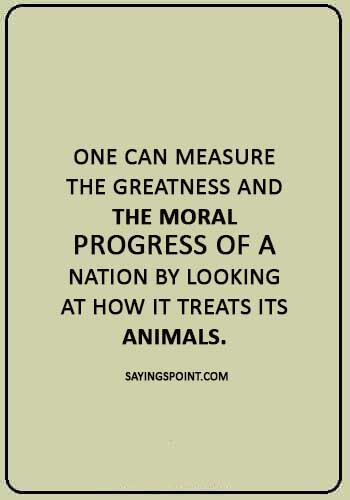 """nature quotes - """"One can measure the greatness and the moral progress of a nation by looking at how it treats its animals."""""""