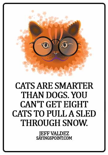 Cat  Sayings - Cats are smarter than dogs. You can't get eight cats to pull a sled through snow. - Jeff Valdez