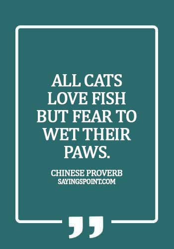 Cat  Sayings - All cats love fish but fear to wet their paws. - Chinese Proverb