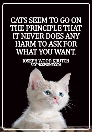 inspirational cat quotes - Cats seem to go on the principle that it never does any harm to ask for what you want. - Joseph Wood Krutch