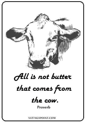 """show cow quotes - """"All is not butter that comes from the cow."""""""