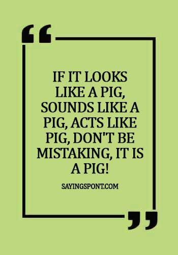 """Funny Pig Quotes - """"If it looks like a pig, sounds like a pig, acts like pig, don't be mistaking, it is a pig!"""""""
