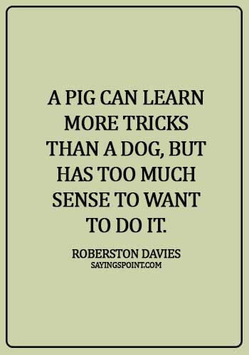 """Pig Sayings - """"A pig can learn more tricks than a dog, but has too much sense to want to do it."""" —Roberston Davies"""