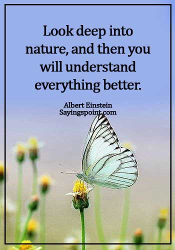 Nature Sayings - Look deep into nature, and then you will understand everything better. - Albert Einstein
