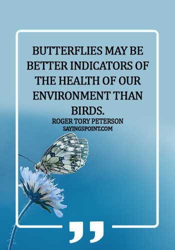 Environment Quotes - Butterflies may be better indicators of the health of our environment than birds.